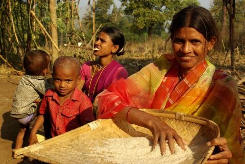 Rice: main crop, main food.