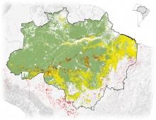 Gelb: Abholzung 2018; Rot: Feuer 2019